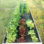 Ограждение для компоста, насыпные грядки