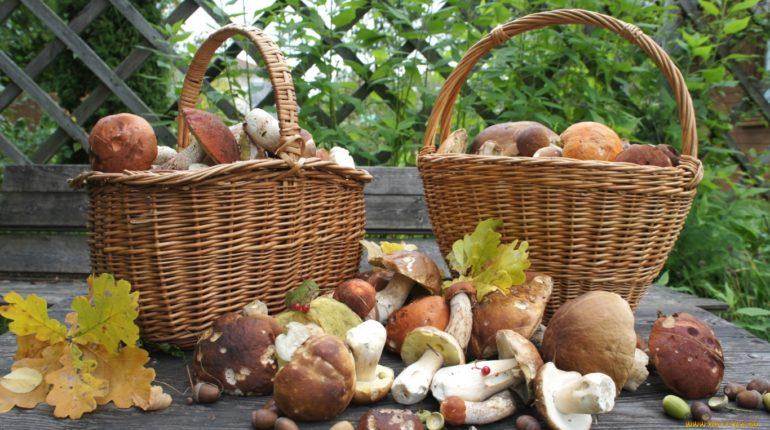 Съедобные грибы, описание, фото