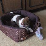 Первая дрессировка щенка 2 месяца, 1 неделя