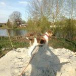 Первое купание щенка фокстерьера