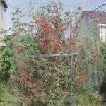 Защита урожая от птиц